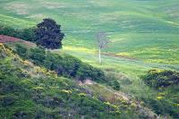 Podere Ulimeto Pesciolini - vista sulla campagna volterrana
